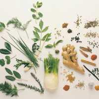Vários Tipo de Plantas Medicinais